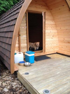 camping pod dog